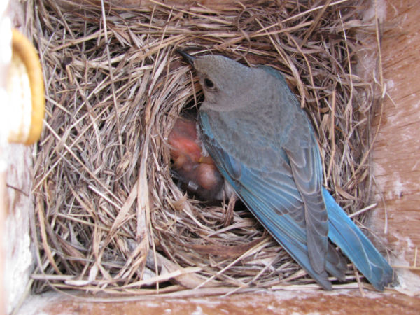 BB Nest