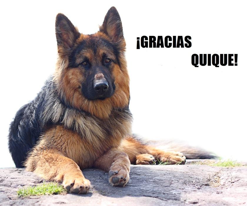 perro_pastor_conlogo